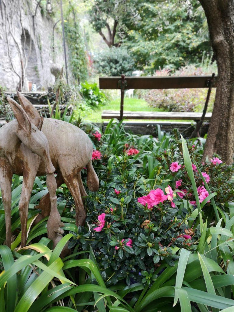 Blossomzine azalea encore fiorita autunno (2)