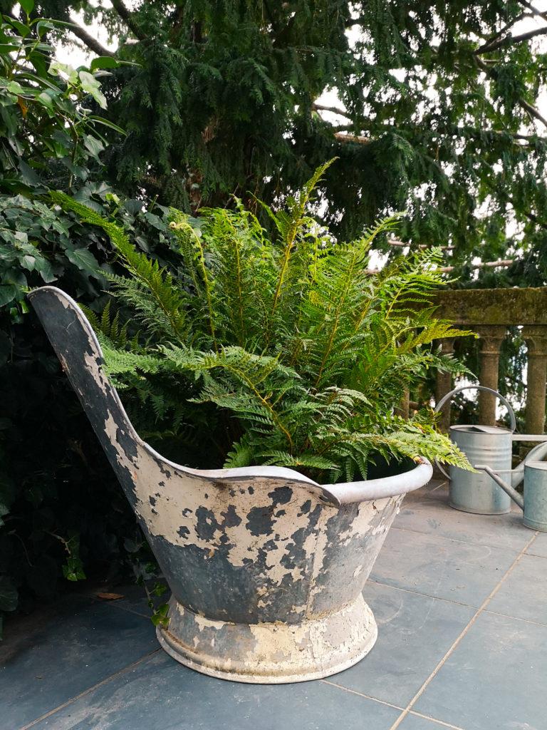 """Polystichum setiferum  ( la felce )  de """"Il Giardino dell'Eden"""" di Arena Vivai"""