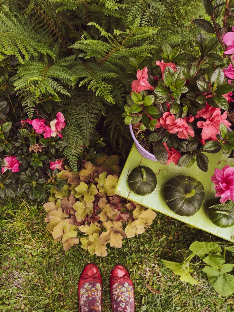 Blossomzine come costruire un set autunnale per instagram con le azalee encore fiorite