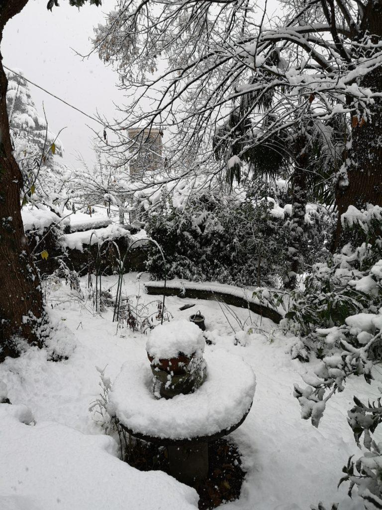 Impara a progettare un giardino con la neve