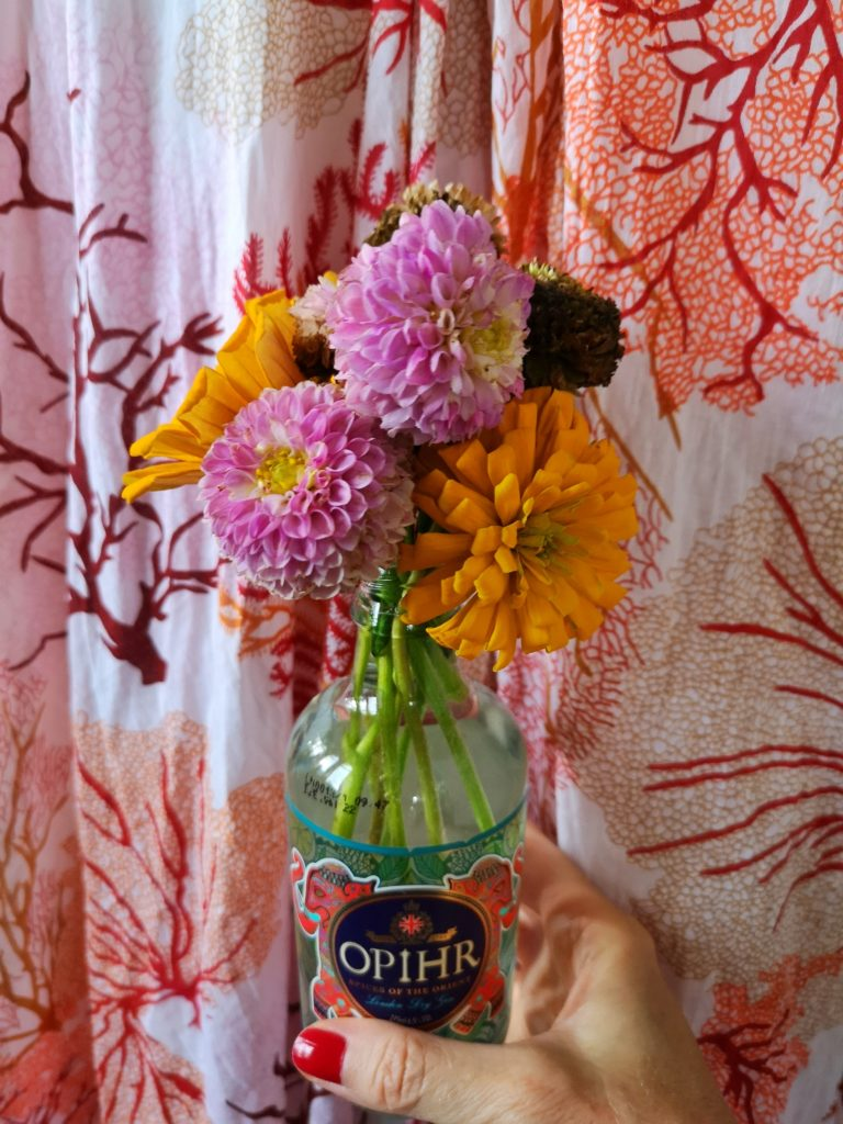 blossomzine fiori da giardino dimenticati zinnia e dalia pon pon