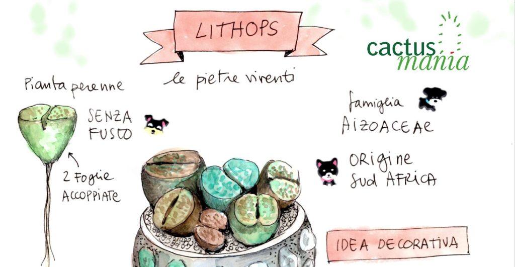lithops scheda coltivazione blossomzine cactusmania